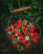 What are the health benefits of strawberries - container of strawberries